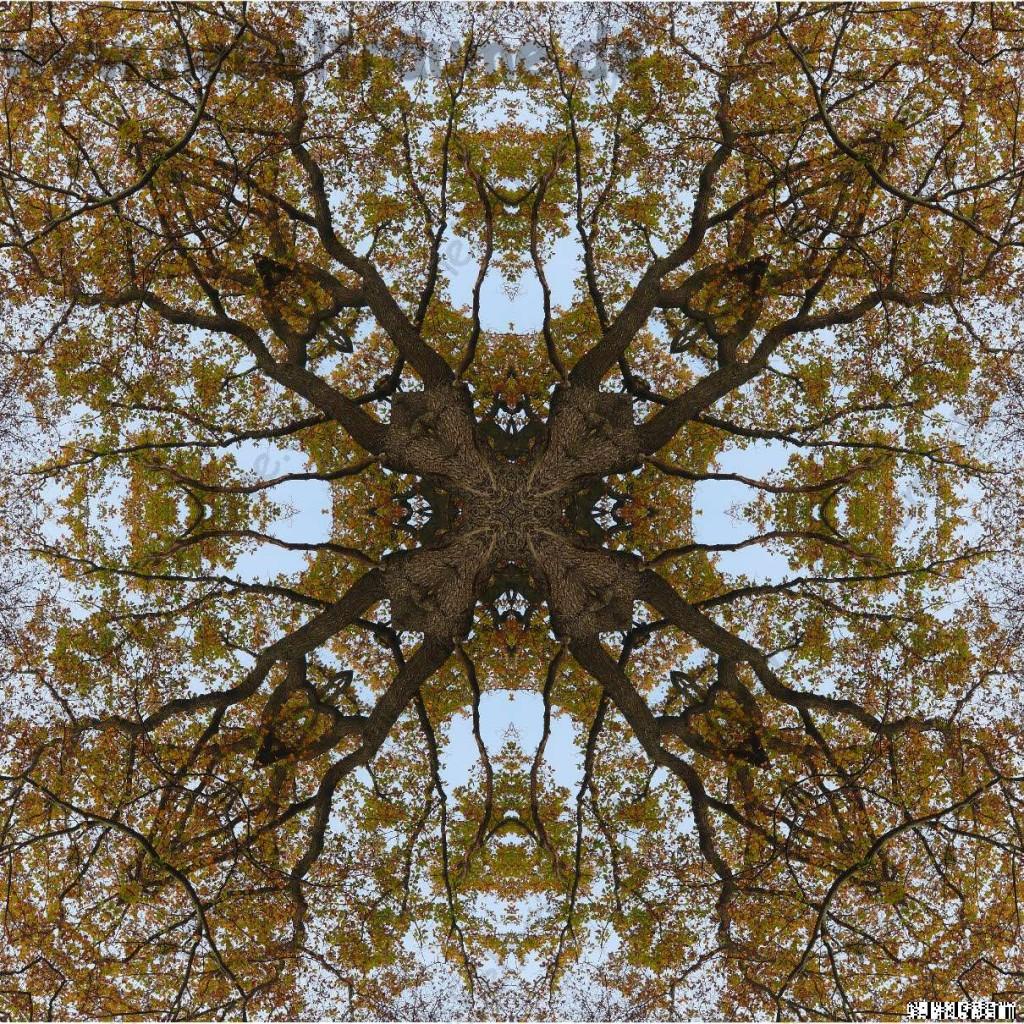 Mandala aus Buche und Eiche