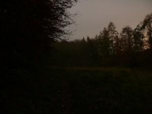 Waldweg im Mondlicht