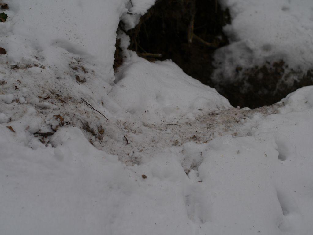 Schnee vor dem Dachsbau